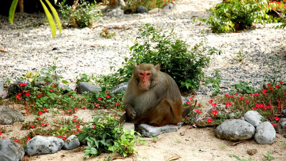 đảo khỉ - vinhlanha.com